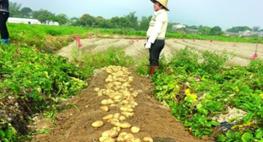 昊华公司内蒙华斯特分公司达茂旗种薯基地